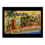 Greetings from Florida Land of Sunshine Postcard
