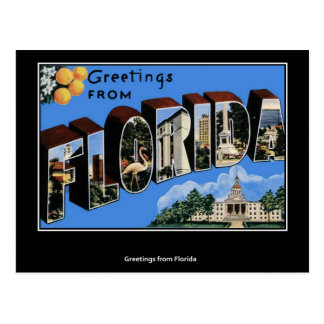 Greetings from Florida Postcard Postcard