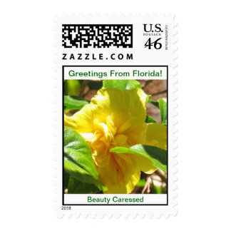 GREETINGS FROM FLORIDAseries-50 PROFIT TO SCHOOLS Postage Stamps