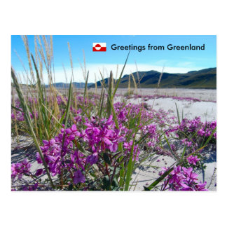 Greetings from Greenland 5 Postcard