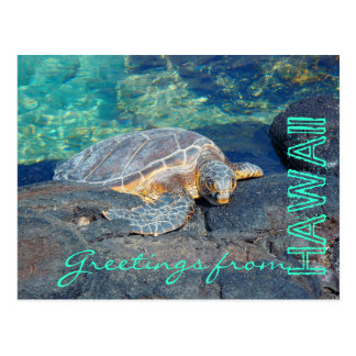 Greetings from Hawaii bright turtle postcard