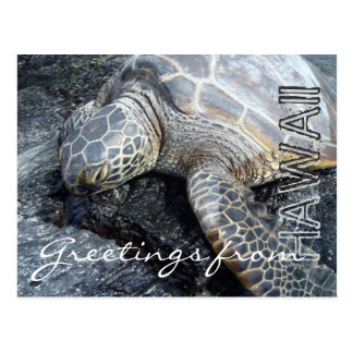Greetings from Hawaii sleepy turtle postcard