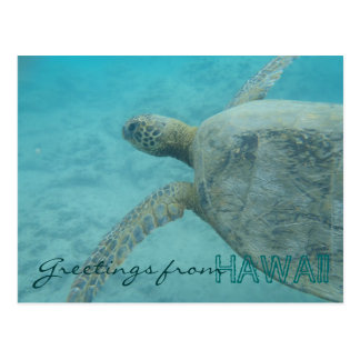 Greetings from Hawaii underwater turtle postcard