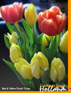 Dutch jigsaw puzzles zazzle greetings from holland dutch tulips puzzle m4hsunfo