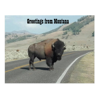 Greetings from Montana Postcard