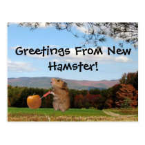Greetings From New Hamster!  Postcard