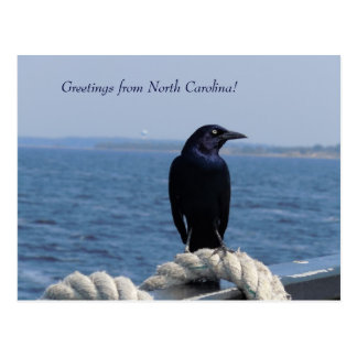 Greetings from North Carolina (Black Bird) Postcard