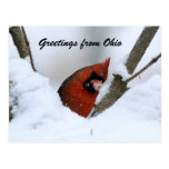 Greetings from Ohio Postcards