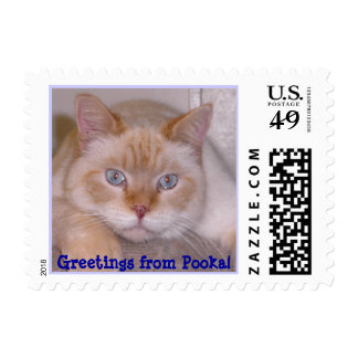 Greetings from Pooka! - Customized Postage