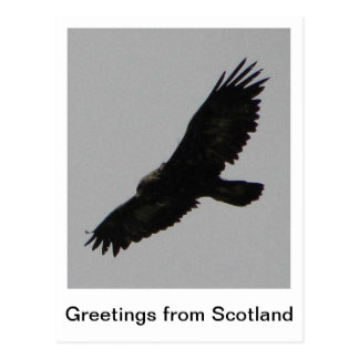 Greetings from Scotland - Golden Eagle Postcard