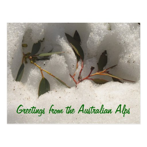 Greetings from the Australian Alps Postcard