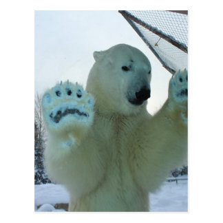 Greetings from the North Polar Bear Post Card