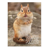 Greetings from the Poconos Chipmunk Postcard