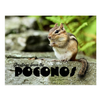 Greetings from the Poconos Mischievous Chipmunk Postcard