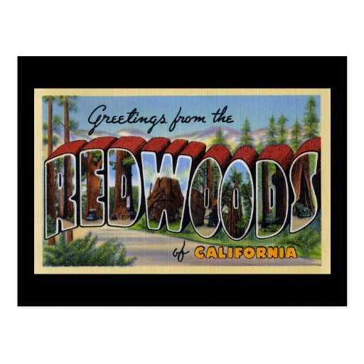 Greetings from the Redwoods of California Postcard