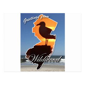 Greetings from Wildwood Postcard