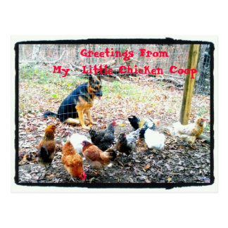 Greetings My Little Chicken Coop Postcard