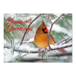 Greetings - Northern Cardinal in snowy pine tree Card