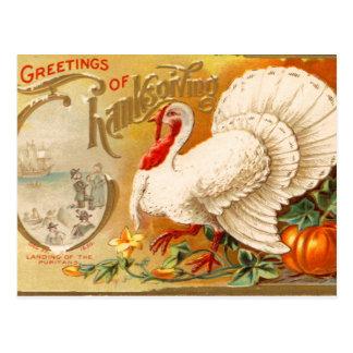 Greetings of Thanksgiving White Turkey Vintage Postcard