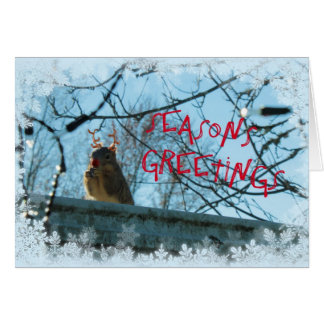 Greetins Greeting Card