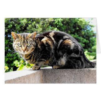 Gremlin the tabby cat greeting card