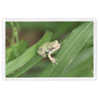 Gret Tree Frog, Vanity Tray. Serving Tray
