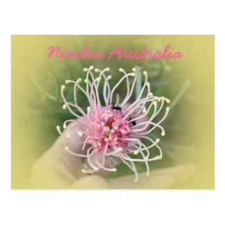 Grevillia Pink Postcard