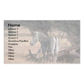 Grevy's Zebra Business Cards