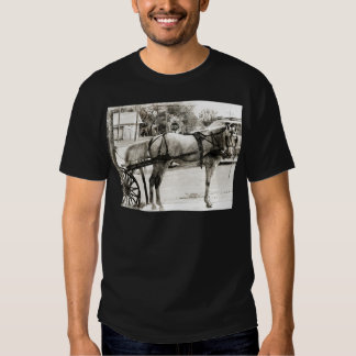 Grey Amish Horse in Black and White Shirt