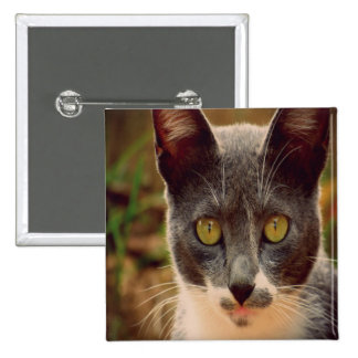 Grey and White Cat 2 Inch Square Button