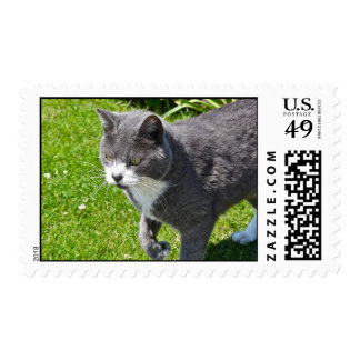Grey and White Cat  Postage