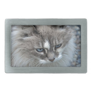 Grey and white kitty cat belt buckle