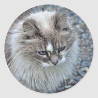 Grey and white kitty cat classic round sticker