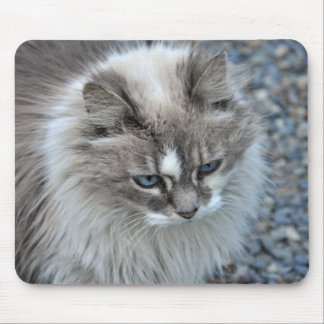 Grey and white kitty cat mouse pad