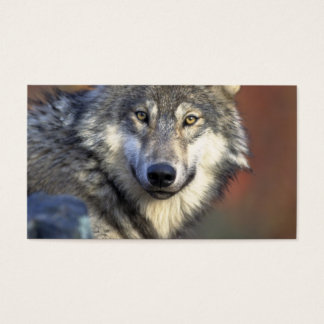 Grey and White Wolf Business Card
