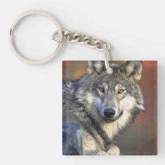 Grey and White Wolf Keychain