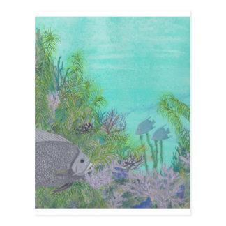 Grey Angelfish Blue Ocean Postcard