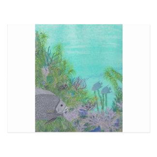 Grey Angelfish Blue Ocean Postcards