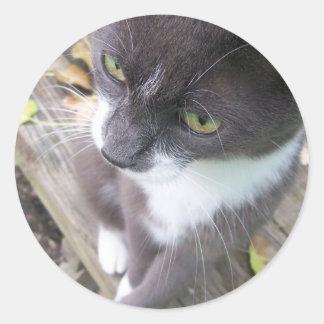 grey autumn cat kitten kitty fall classic round sticker