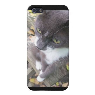 grey autumn cat kitten kitty fall cover for iPhone 5