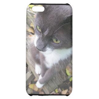 grey autumn cat kitten kitty fall case for iPhone 5C