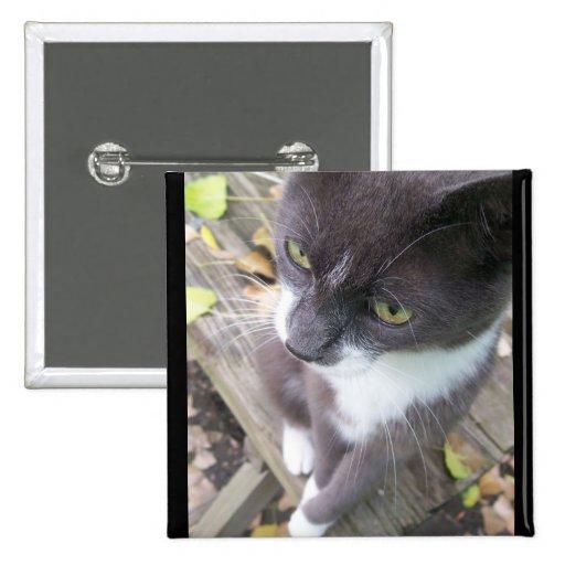grey autumn cat kitten kitty fall pin
