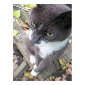 grey autumn cat kitten kitty fall postcard