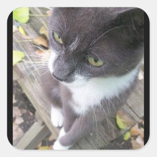 grey autumn cat kitten kitty fall sticker