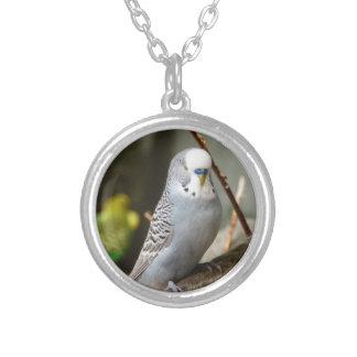 Grey Budgie Bird Custom Jewelry