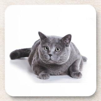 Grey Cat Beverage Coaster