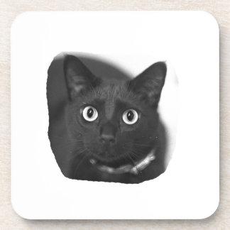 Grey Cat Big Eyes BW Picture Beverage Coaster