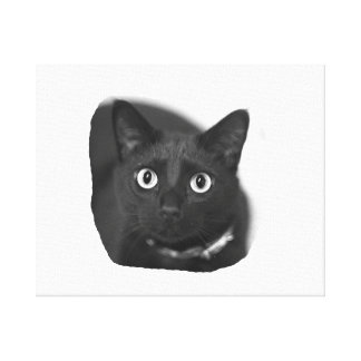 Grey Cat Big Eyes BW Picture Canvas Print