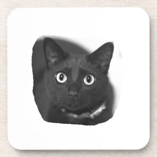 Grey Cat Big Eyes BW Picture Coaster
