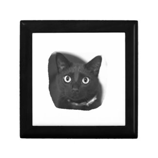 Grey Cat Big Eyes BW Picture Gift Box
